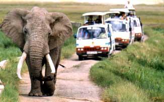 Image result for tourism kenya