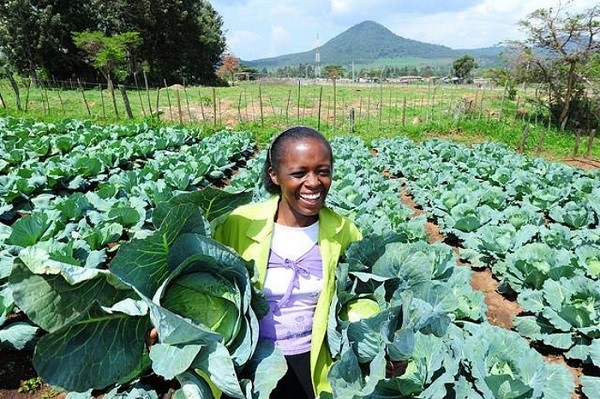 how to grow spinach in south africa